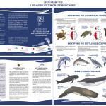 Project Migrate brochure_EN
