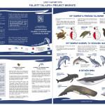 Project Migrate brochure_MT