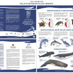 Brochure_ES